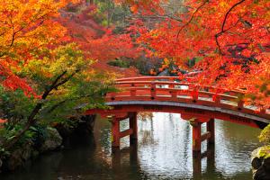 Обои Япония Сады Осень Пруд Мосты Киото Ветки Природа фото