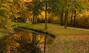 Картинка Нидерланды Парки Осень Пруд Утрехт Деревья Листья Baarn Природа
