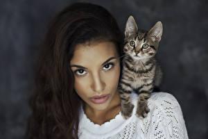 Обои Кошки Лицо Взгляд Котята Девушки Животные фото