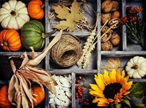 Обои Тыква Осень Подсолнухи Орехи Листья Природа фото