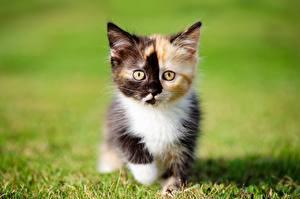Обои Кот Котята Траве Животные