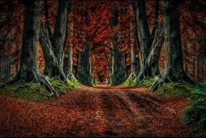 Обои Осень Дороги Деревья Природа фото