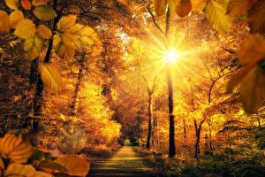 Обои Осень Парки Дороги Деревья Лучи света Солнце Листья Природа фото