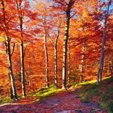 Картинка Сезон года Осенние Карпаты Деревья Листья
