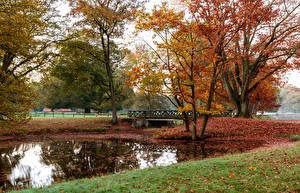 Фото Германия Парки Осень Мосты Пруд Деревья Листья Wildpark Dülmen Природа