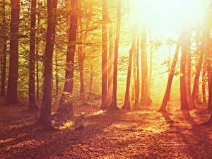 Фото Осень Деревья Листья Лучи света Природа