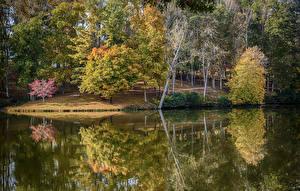 Фотография США Озеро Осень Деревья Lanier Martinsville Virginia Природа