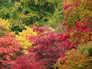 Обои Осень Ветки Листья Природа фото