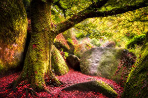 Фотография Осень Камни Ствол дерева Мох Природа