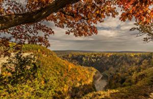 Обои Пейзаж Осень Реки Леса Ветки Природа фото