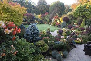 Картинка Великобритания Сады Осень Кусты Walsall Garden