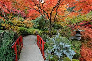 Фотографии Канада Парки Осень Мосты Ванкувер Кусты Деревья Butchart Gardens Природа