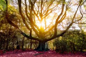 Фотография Осенние Ствол дерева Деревья
