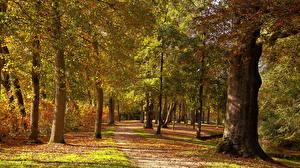 Картинка Нидерланды Парки Осень Утрехт Деревья Ствол дерева Baarn