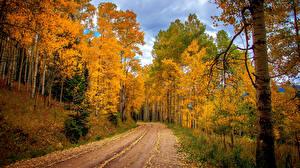 Обои Осень Дороги Леса Деревья Ствол дерева Природа фото