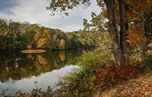 Обои США Осень Озеро Деревья Ствол дерева Lake Lanier Martinsville Virginia Природа фото