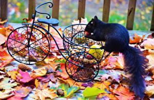 Обои Белки Осень Велосипед Листья Черный Животные фото