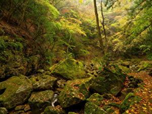 Обои Леса Осень Камни Мох Листья Природа фото