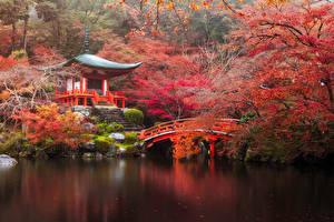 Обои Япония Осень Парки Пагоды Мосты Пруд Киото Деревья Природа фото