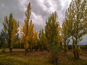Обои Осень Деревья Природа фото