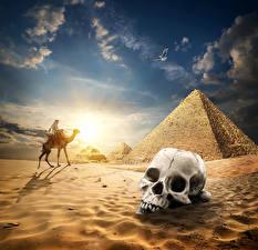 Обои Египет Пустыни Черепа Верблюды Небо Рассветы и закаты Пирамида Песок Cairo Природа