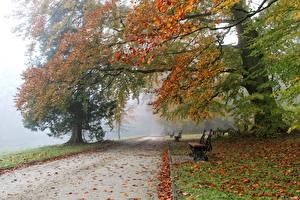 Картинка Бельгия Парки Осень Деревья Скамейка Листья Туман Meise Природа