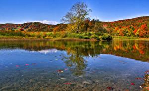 Обои Канада Озеро Осень Леса Waterville Quebec Природа фото