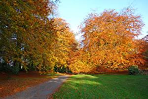 Обои Ирландия Парки Осень Деревья Трава Rowallen Gardens Saintfield Природа фото