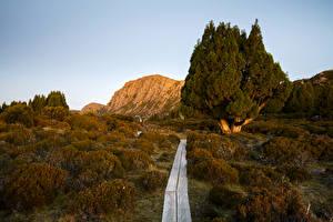 Обои Австралия Парки Осень Деревья Кусты Тропа Jerusalem National Park Tasmania Природа фото