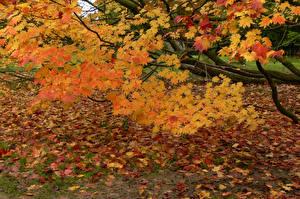 Обои Времена года Осень Листья Ветки Природа фото