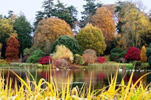 Обои Великобритания Озеро Осень Деревья Mount Stewart Природа фото