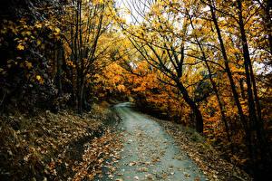Обои Леса Осень Дороги Деревья Природа фото