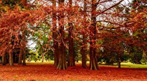 Обои Осень Деревья Ствол дерева Природа фото