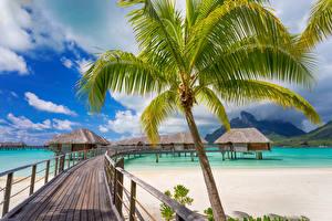 Обои Французская Полинезия Тропики Побережье Мосты Бора-Бора Бунгало Пальмы Природа фото