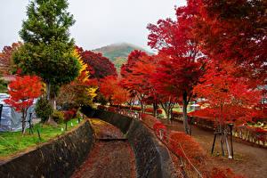 Обои Япония Осень Деревья Kawaguchiko Природа фото