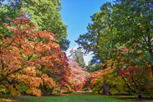 Обои Великобритания Парки Осень Деревья Westonbirt Arboretum Природа фото