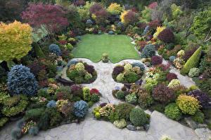 Обои Великобритания Сады Кусты Газон Walsall Garden Природа фото