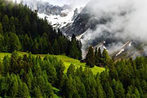 Картинка Швейцария Горы Леса Альпы