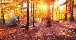 Фотографии Украина Осенние Камень Леса Карпаты Деревья Листва Природа