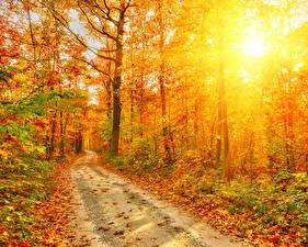 Обои Осень Дороги Леса Деревья Лучи света Листья Природа фото