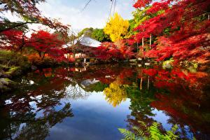 Обои Япония Пруд Парки Осень Киото Деревья Природа фото