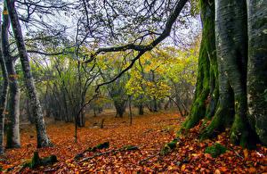 Обои Осень Деревья Ствол дерева Мох Листья Ветки Природа фото
