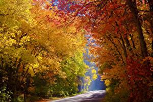 Обои Осень Леса Дороги Деревья Природа фото