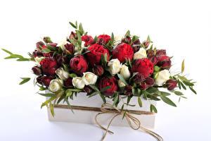 Картинки Розы Много Бутон Белый фон Цветы