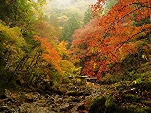 Обои Осень Леса Камни Мох Ручей Природа фото