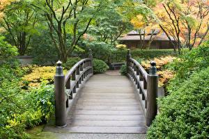 Фото Канада Сады Мосты Ванкувер Кусты Butchart Gardens Природа