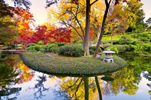 Обои Осень Парки Пруд Деревья Кусты Природа фото