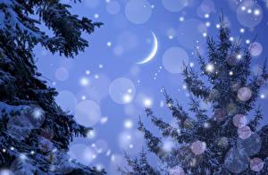 Фото Зимние Небо Полумесяц Луна Ели Природа