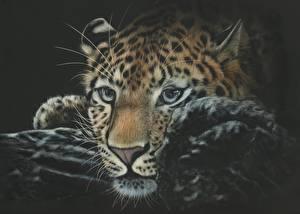 Обои Большие кошки Леопарды Рисованные Морда Взгляд Животные фото