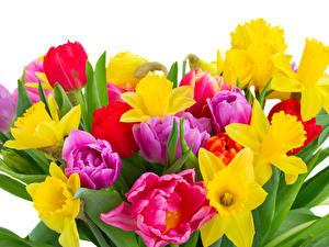 Фотографии Букеты Тюльпаны Нарциссы Белом фоне Цветы